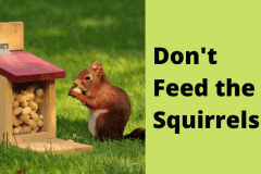How-to-Remove-Squirrels-2-1