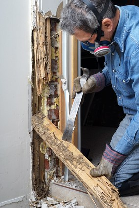 Termite Control Options