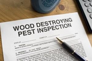WDI termite Inspection