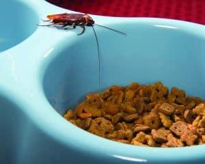 American Roach Control Kingwood