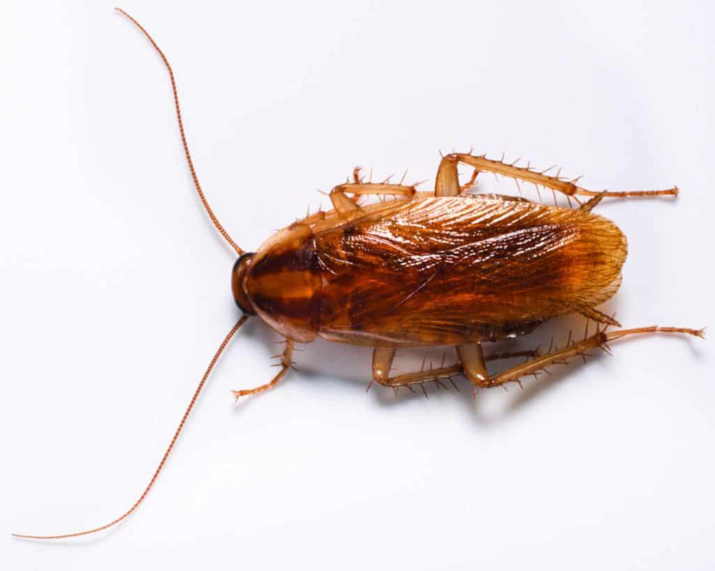 german roach control kingwood