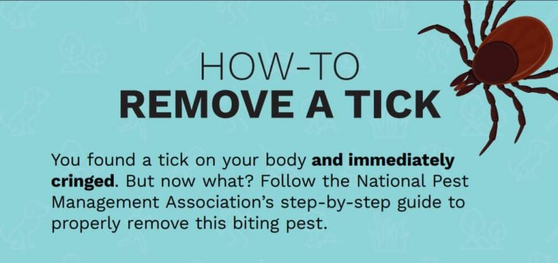 How to Remove a Tick 1