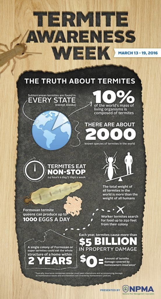 Termite Trouble In Houston