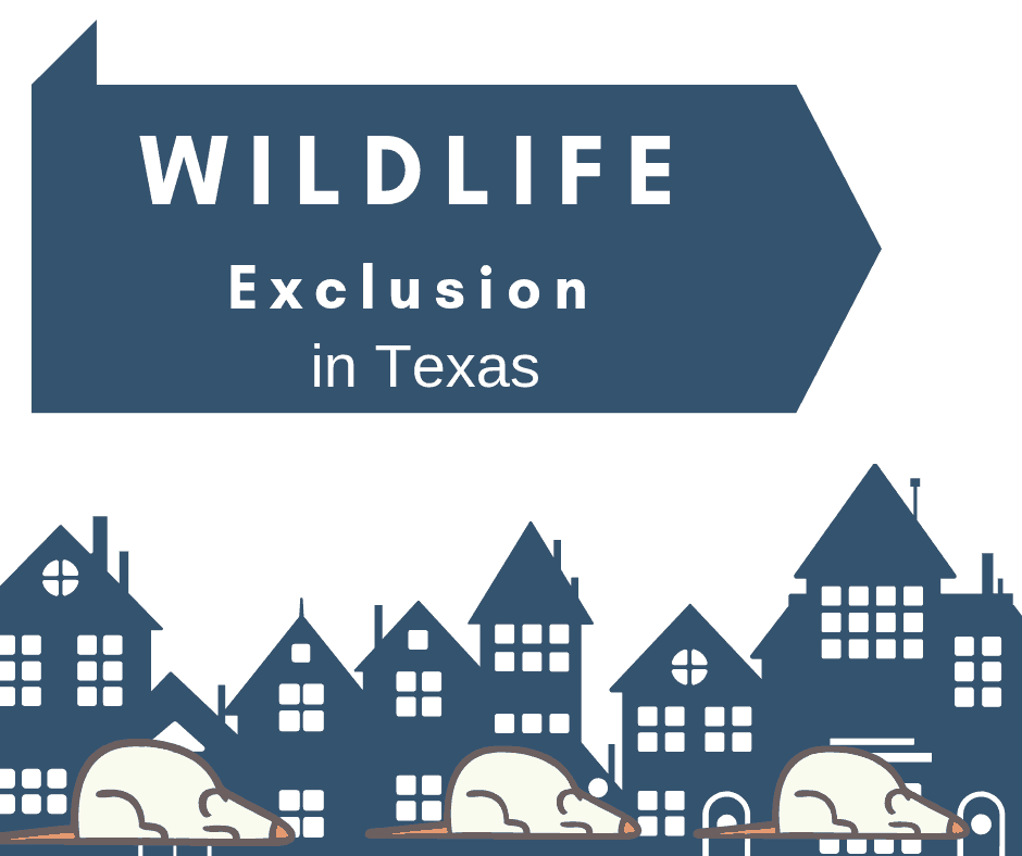 Wildlife Exclusion in Texas