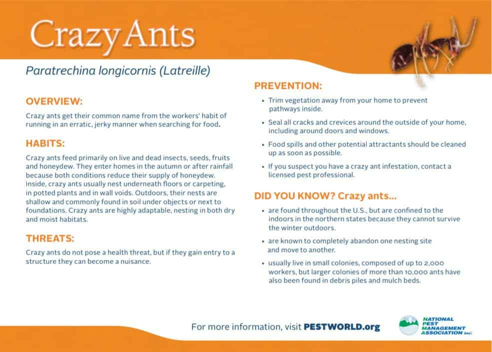Getting Rid of Crazy Ants