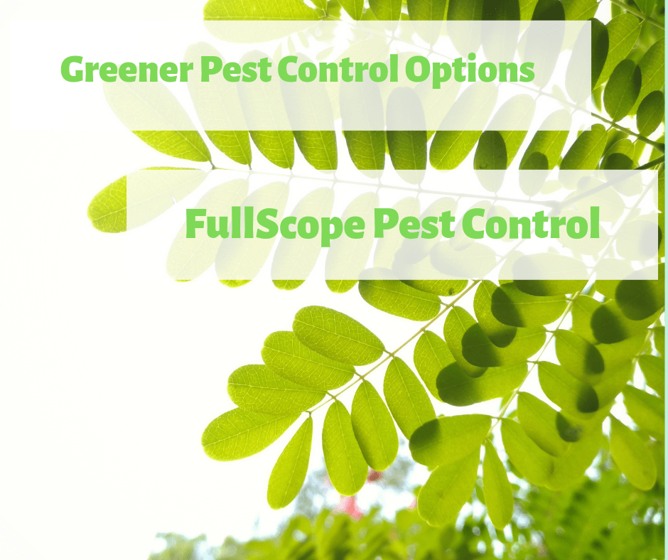 Looking for a Green Pest Solution?