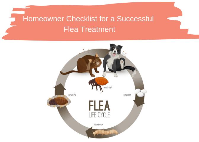 Homeowner Checklist for a Successful Flea Treatment
