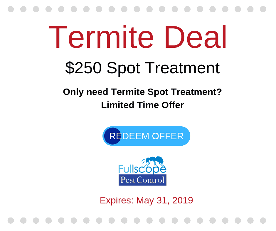 Save on a Termite Spot Treatment