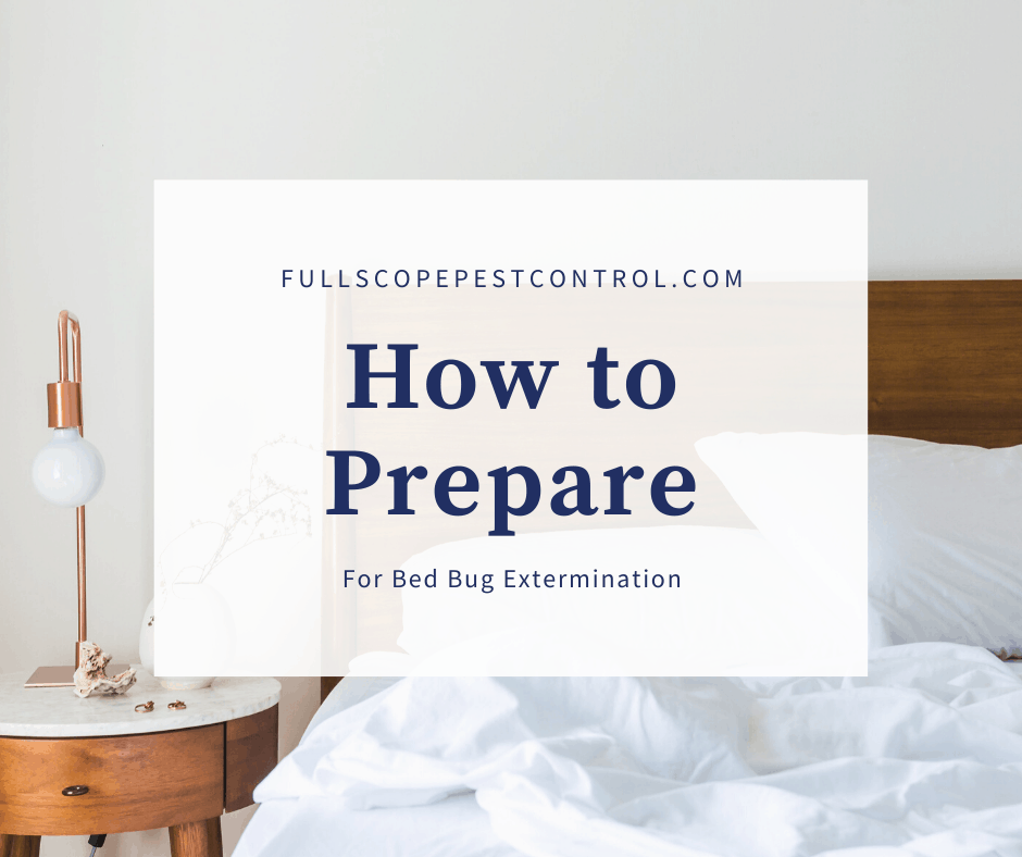 How to Prepare for Bed Bug Extermination