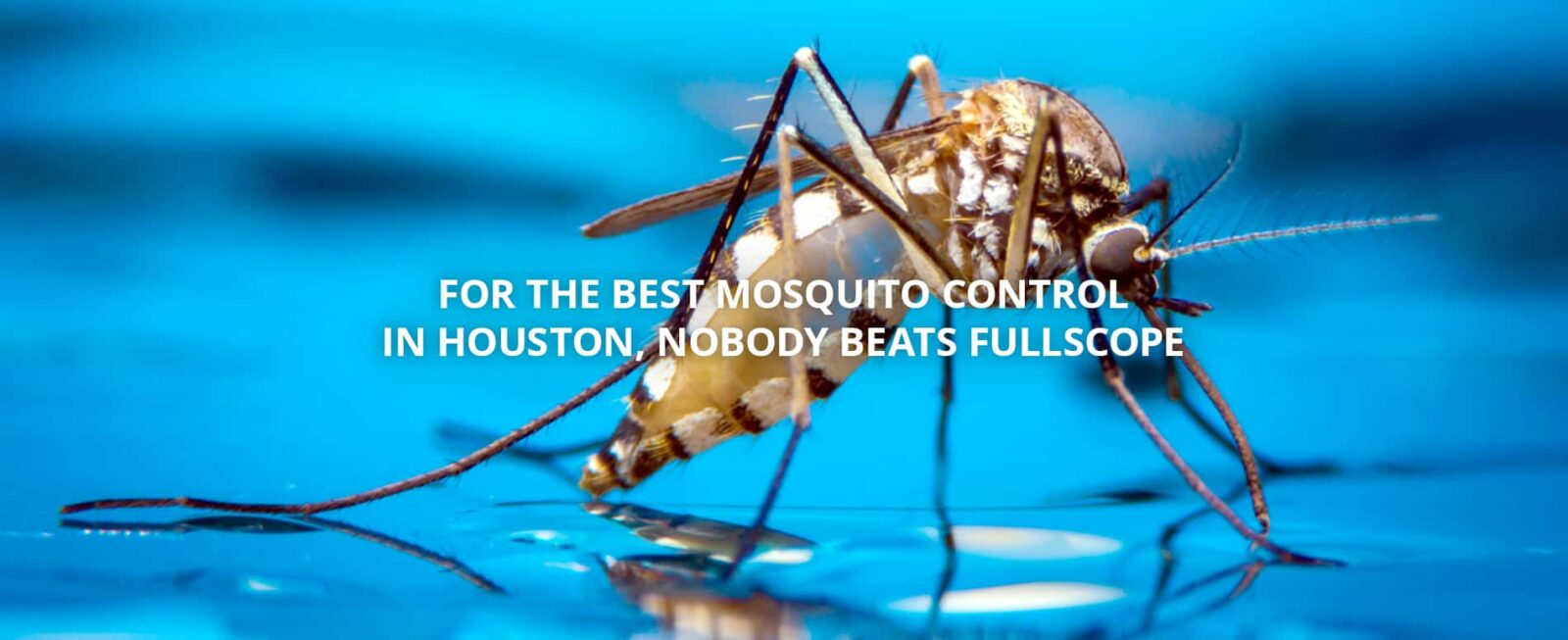 insect mosquito water