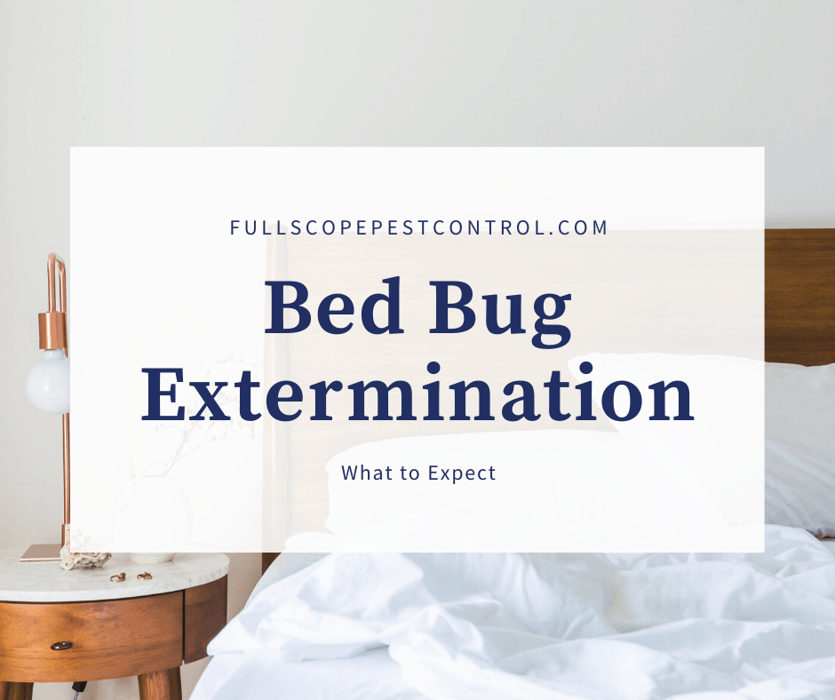 Bed Bug Extermination:  What to Expect