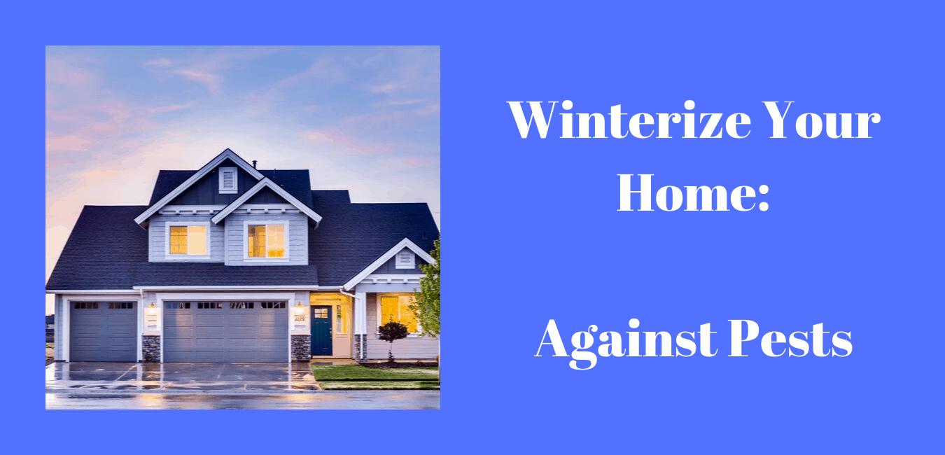Simple Steps to Winterize Your Home Against Pest