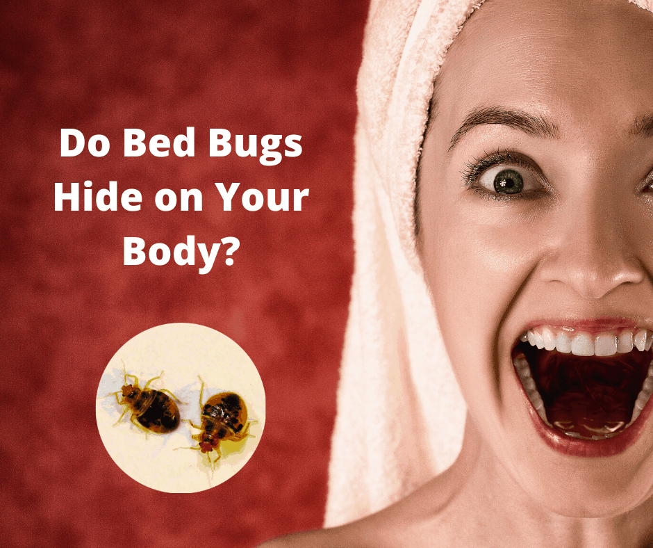 Where Do Bed Bugs Hide On Your Body?