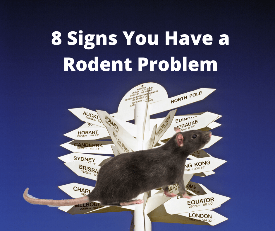 8 Signs You Have a Rodent Problem
