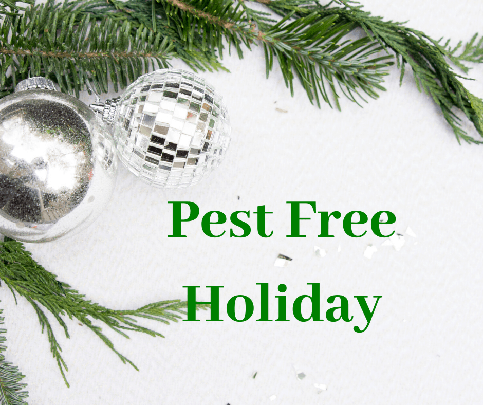 Pest Free Holiday Guide