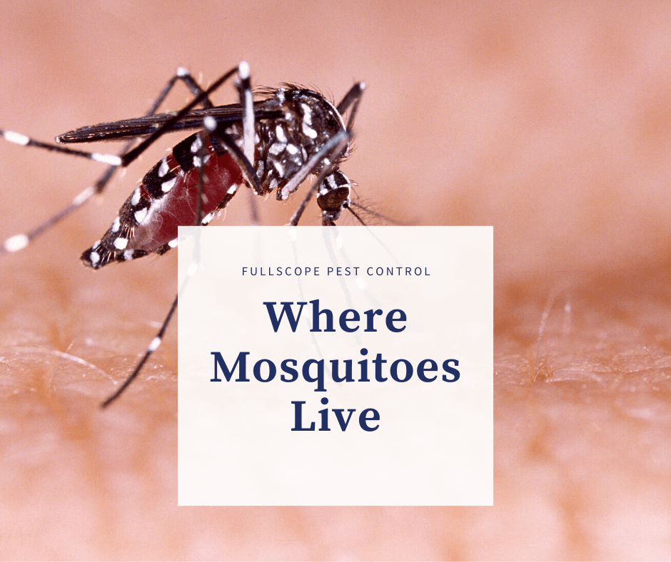 Where Mosquitoes Live