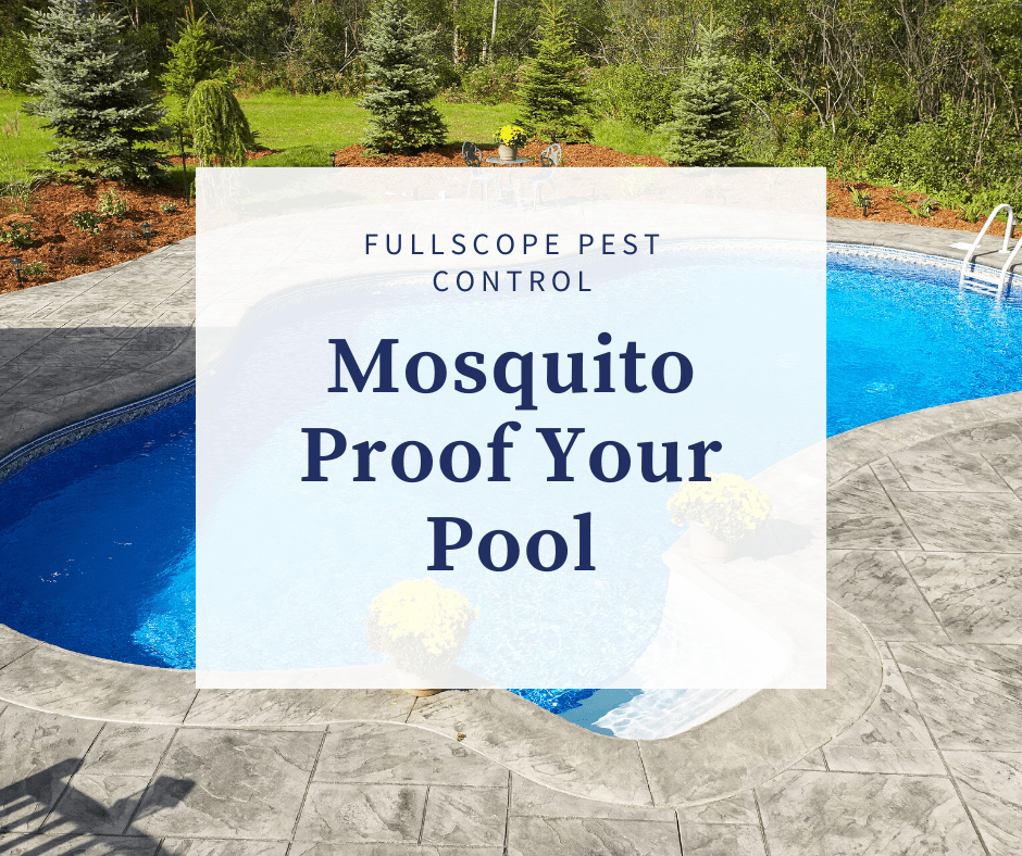 Mosquito Proof Your Pool