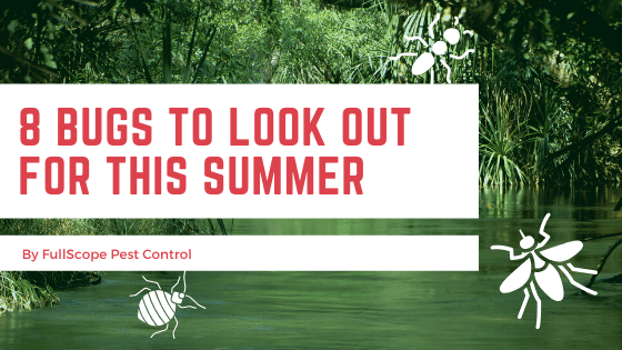 6 Bugs to Look Out for This Summer