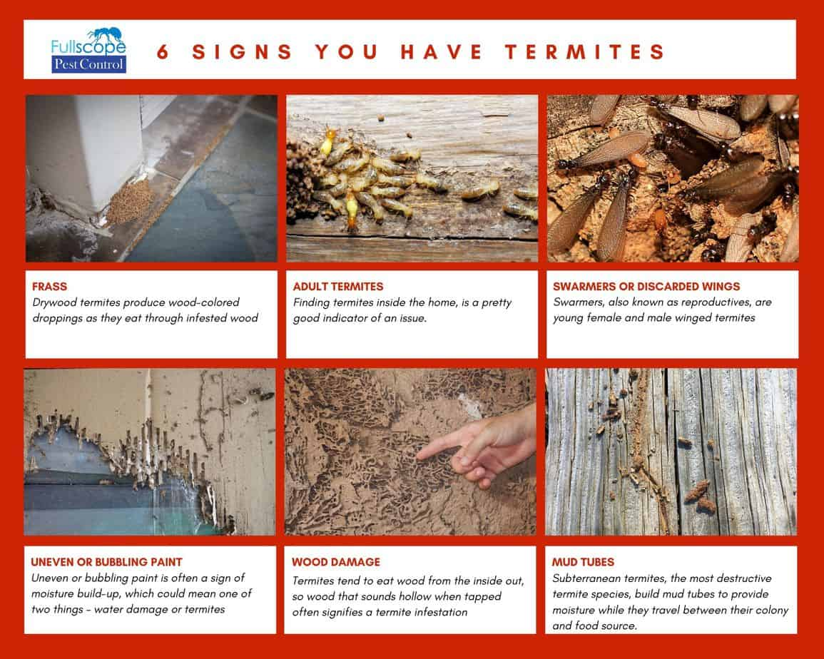 6 signs you have termites