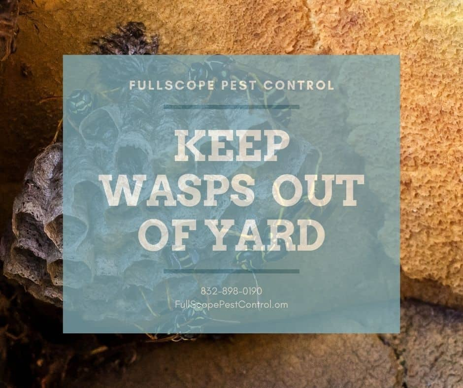 Keep Wasps Away From Your Porter, Texas Backyard Cookout