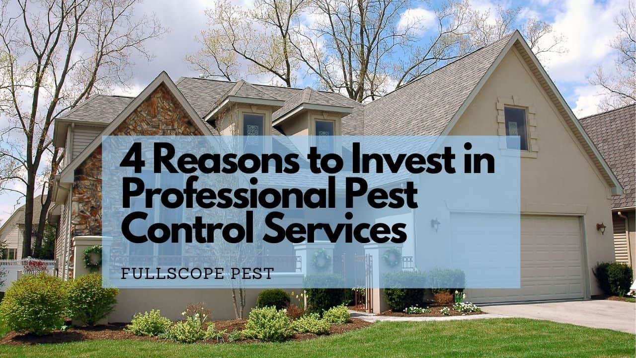 Top 4 Reasons to Invest in Professional Pest Control For Your Kingwood, Texas Home