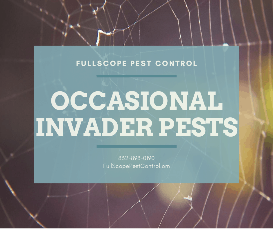 4 Things You Can Do About Occasional Invader