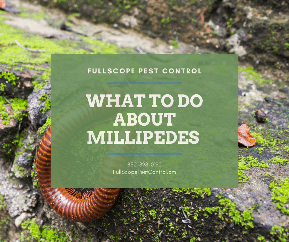 What to Do About Millipedes in Your Humble, Texas Backyard