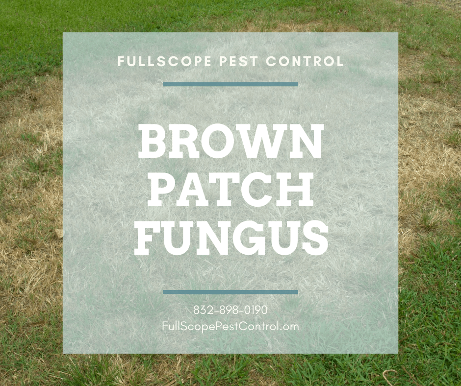 How to Get Rid of Brown Patch in Your New Caney Yard