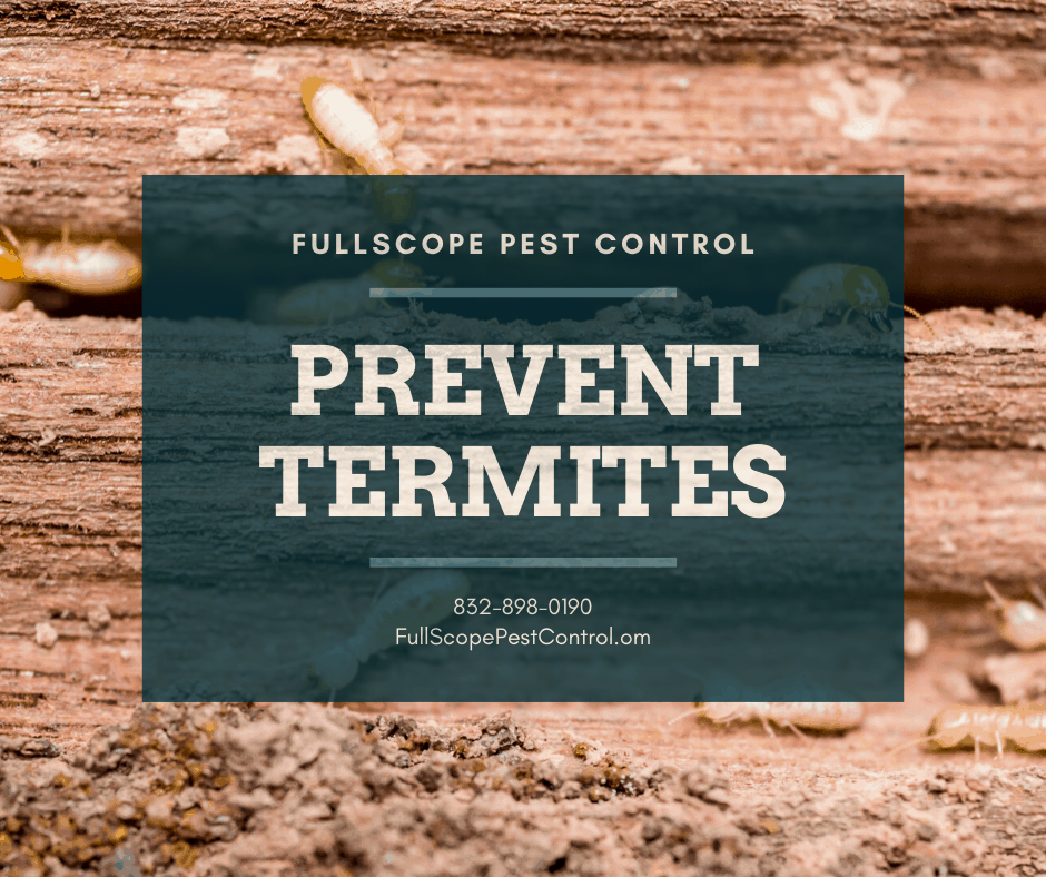 8 Steps to Make Your Porter, TX House Less Attractive to Termites