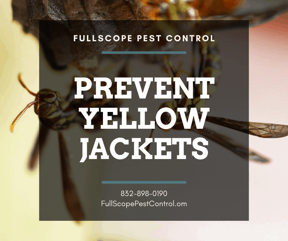 Avoid Painful Encounters with Yellow Jackets in Your Conroe Yard