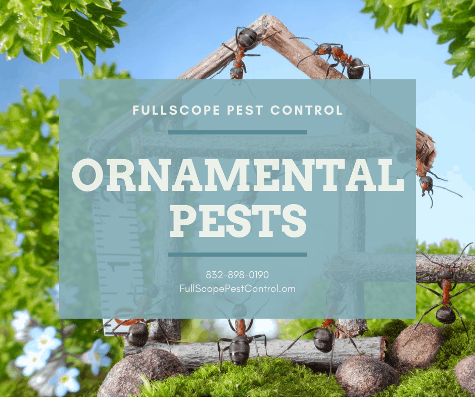 What Pests are Eating My Plants? 5 Types of Ornamental Pests