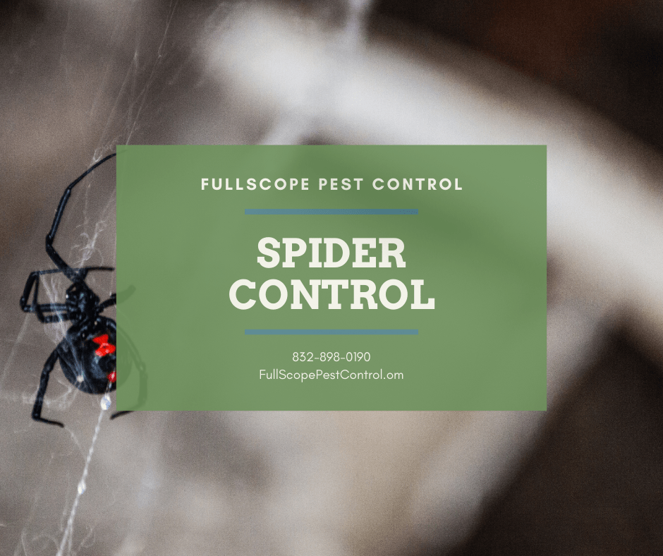 Effective Spider Control for Your Cleveland, Texas House