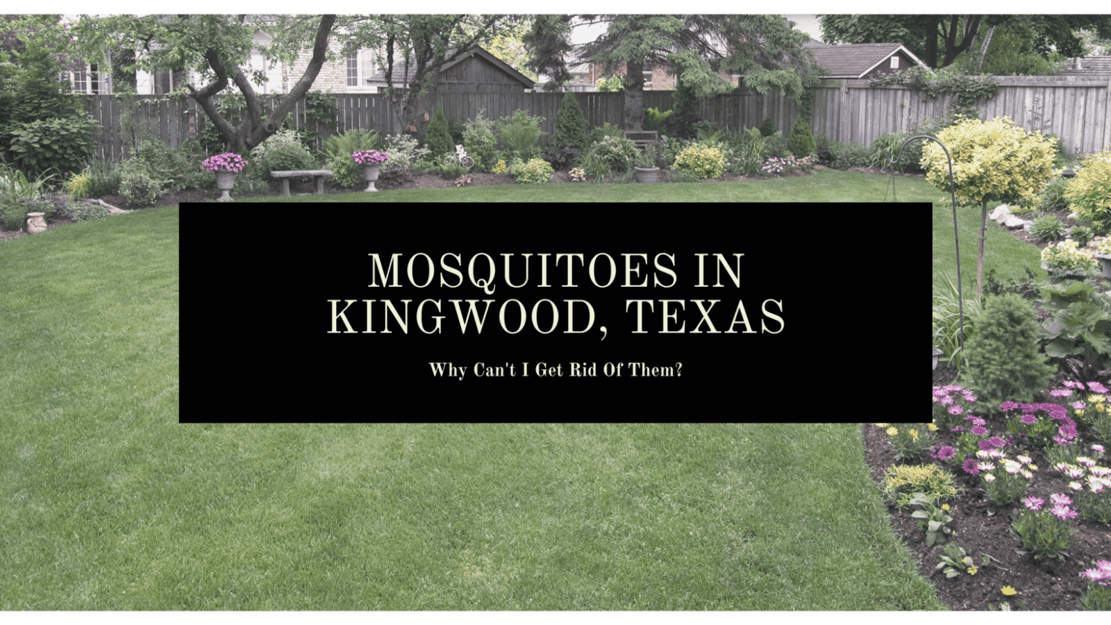 Why Can't I Get Rid of Mosquitoes in My Kingwood, Texas Backyard?