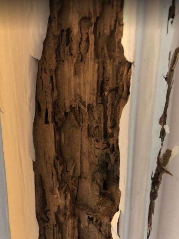 Termite Damage in Porter Texas