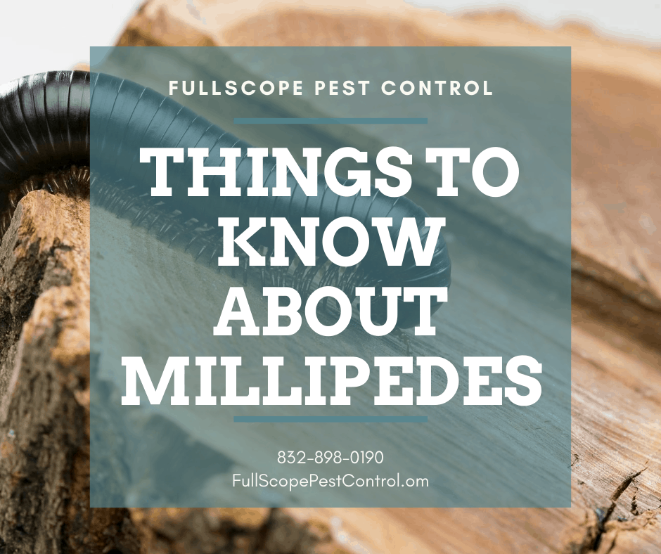What You Should Know About How to Control Millipedes in Your Conroe Yard