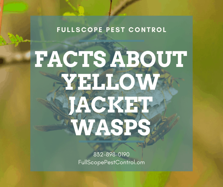8 Facts About Yellowjackets in Your New Caney Yard
