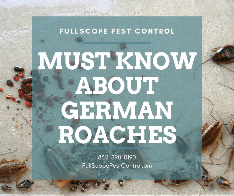 German Cockroaches in your Conroe Home: 6 Things You Should Know
