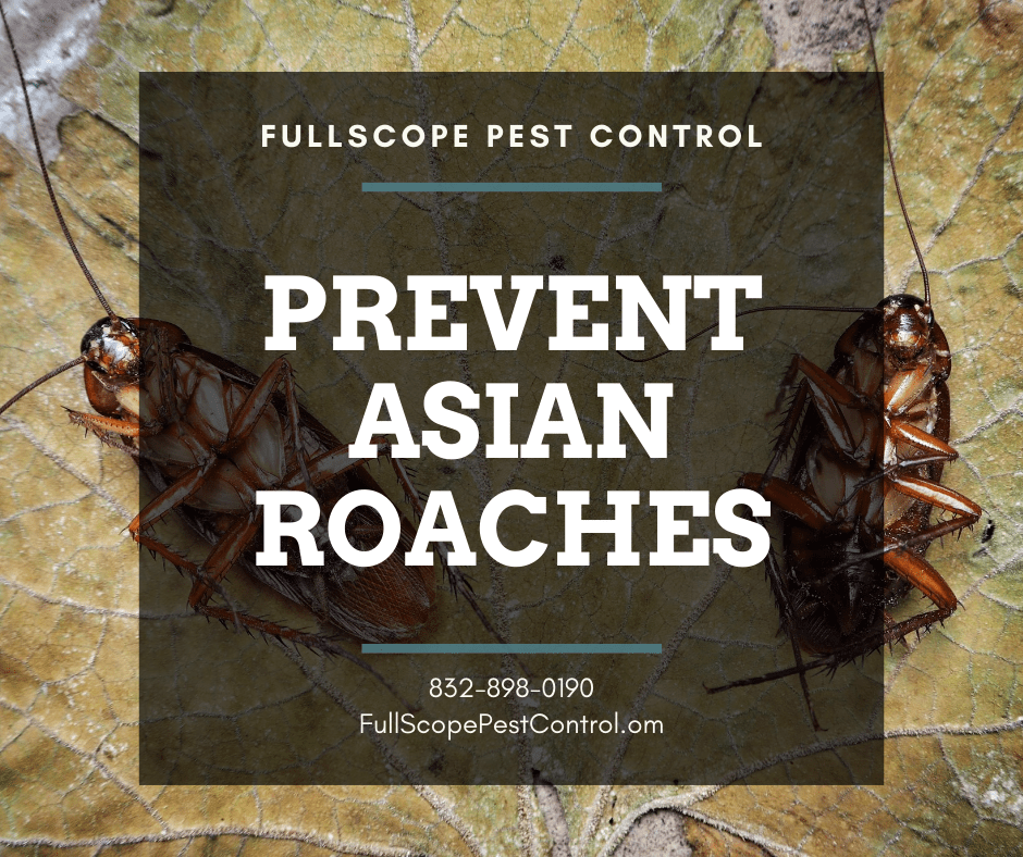How to Prevent Asian Roaches in Your Porter Home