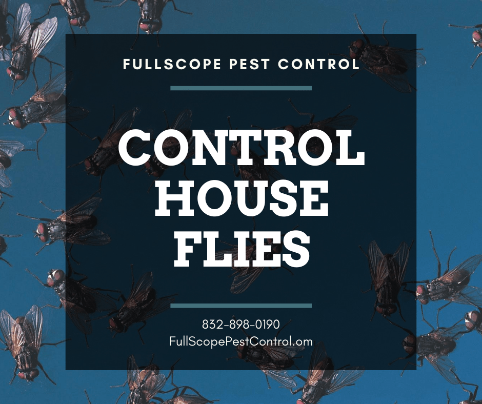 How to Control Flies in Your Kingwood Home