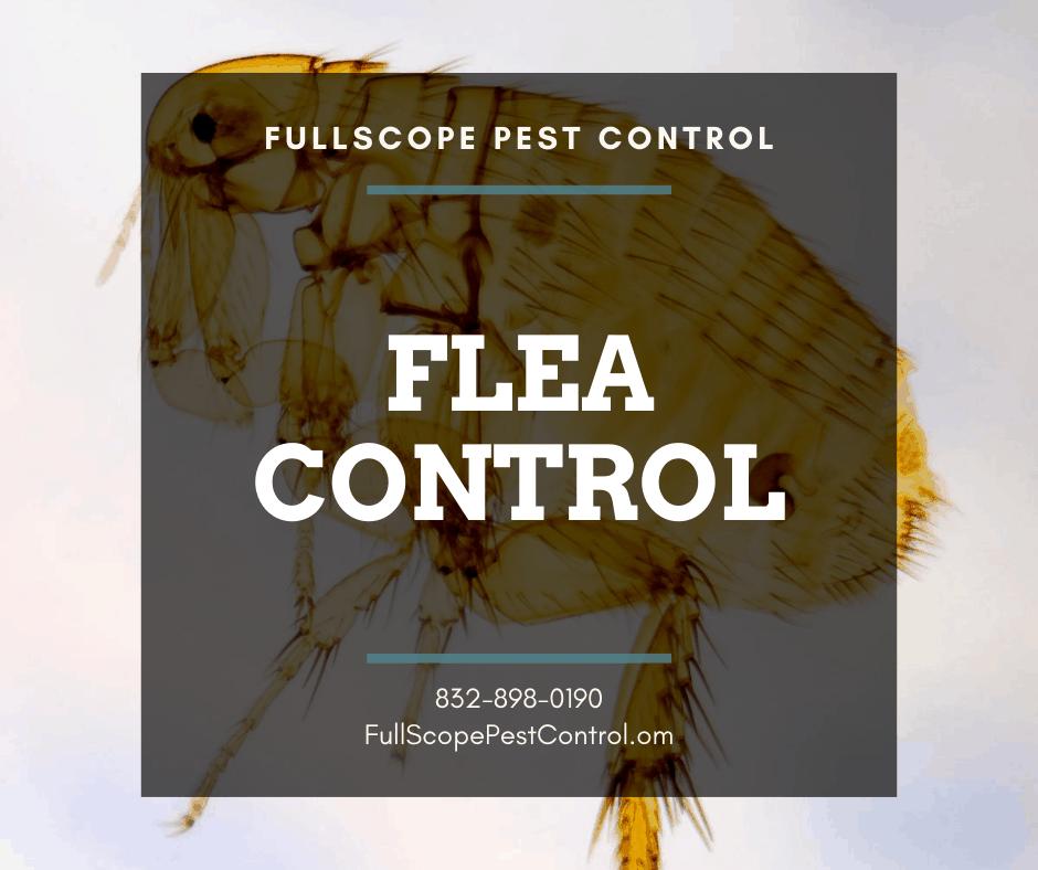 Flea Control For Your Porter Home