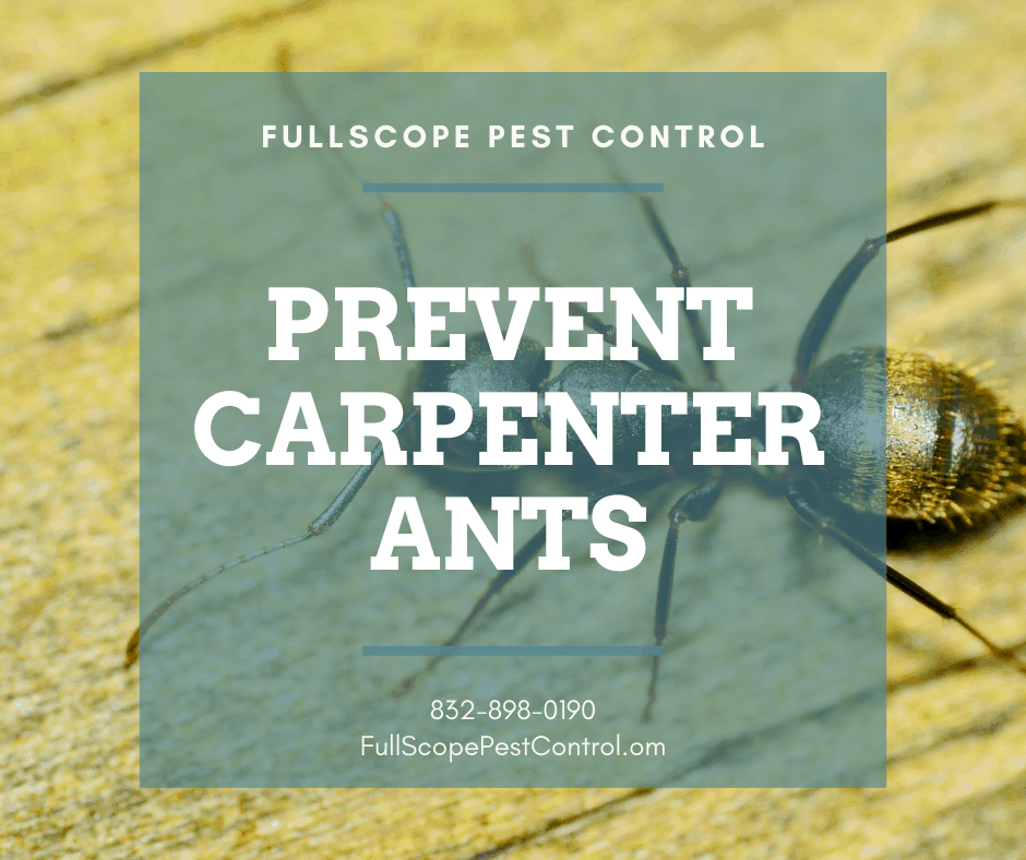 Watch Out for Carpenter Ants Attacking Your Kingwood Home