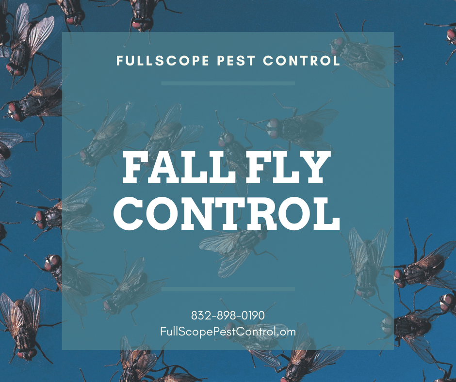 4 Quick Tips to Keep Flies Out of Your Conroe Home This Fall