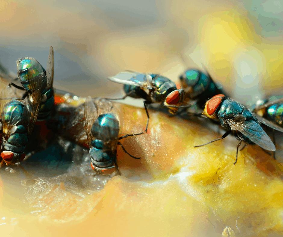Flies Conroe