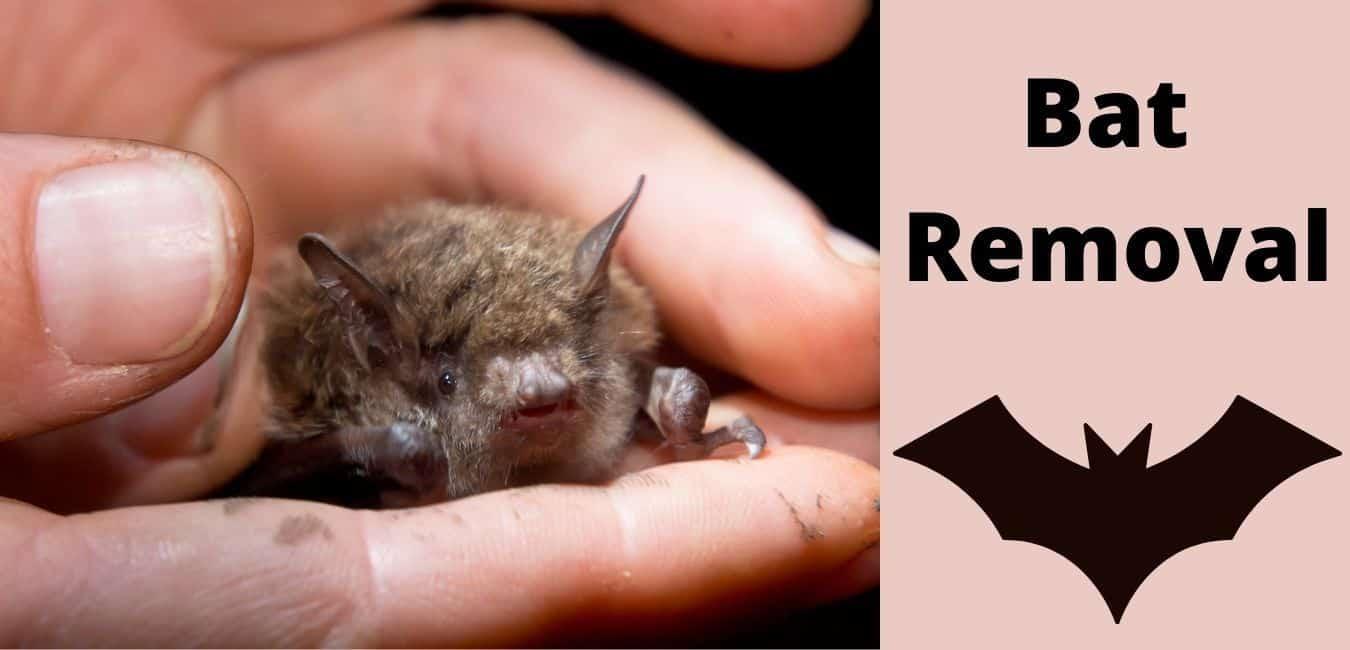 Bat Removal Company