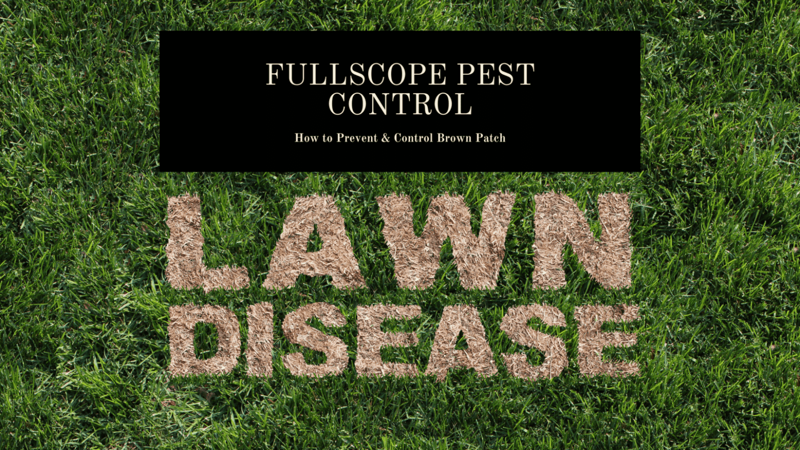 Prevent Brown Patch in Lawn