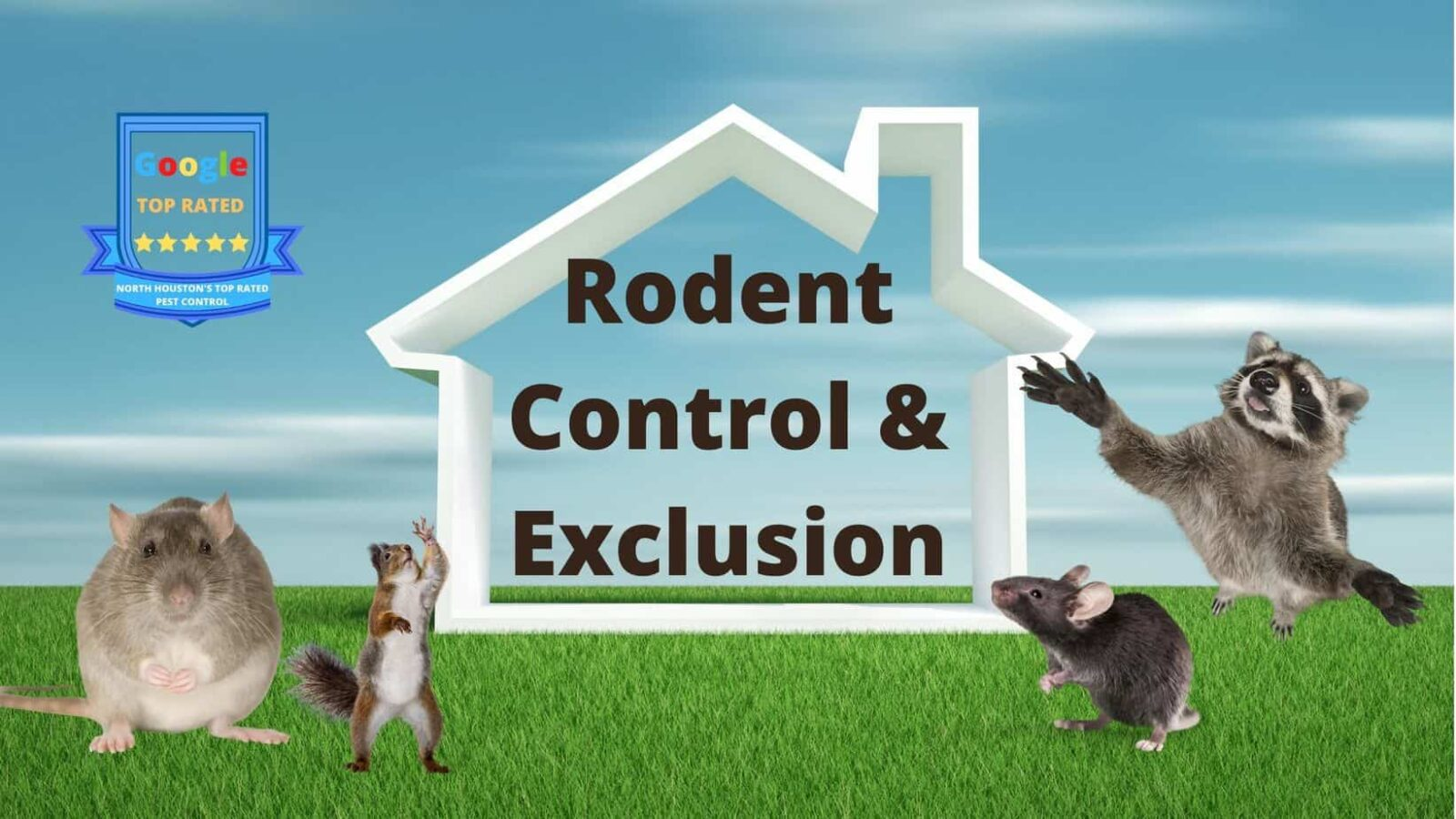 Rodent & Wildlife Control and Exclusion