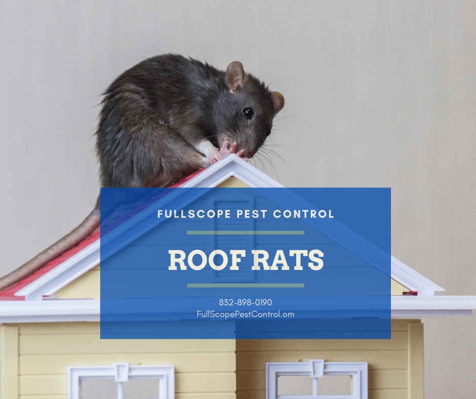 Get Rid of Roof Rats