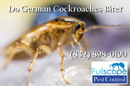 Do German Cockroaches Bite?