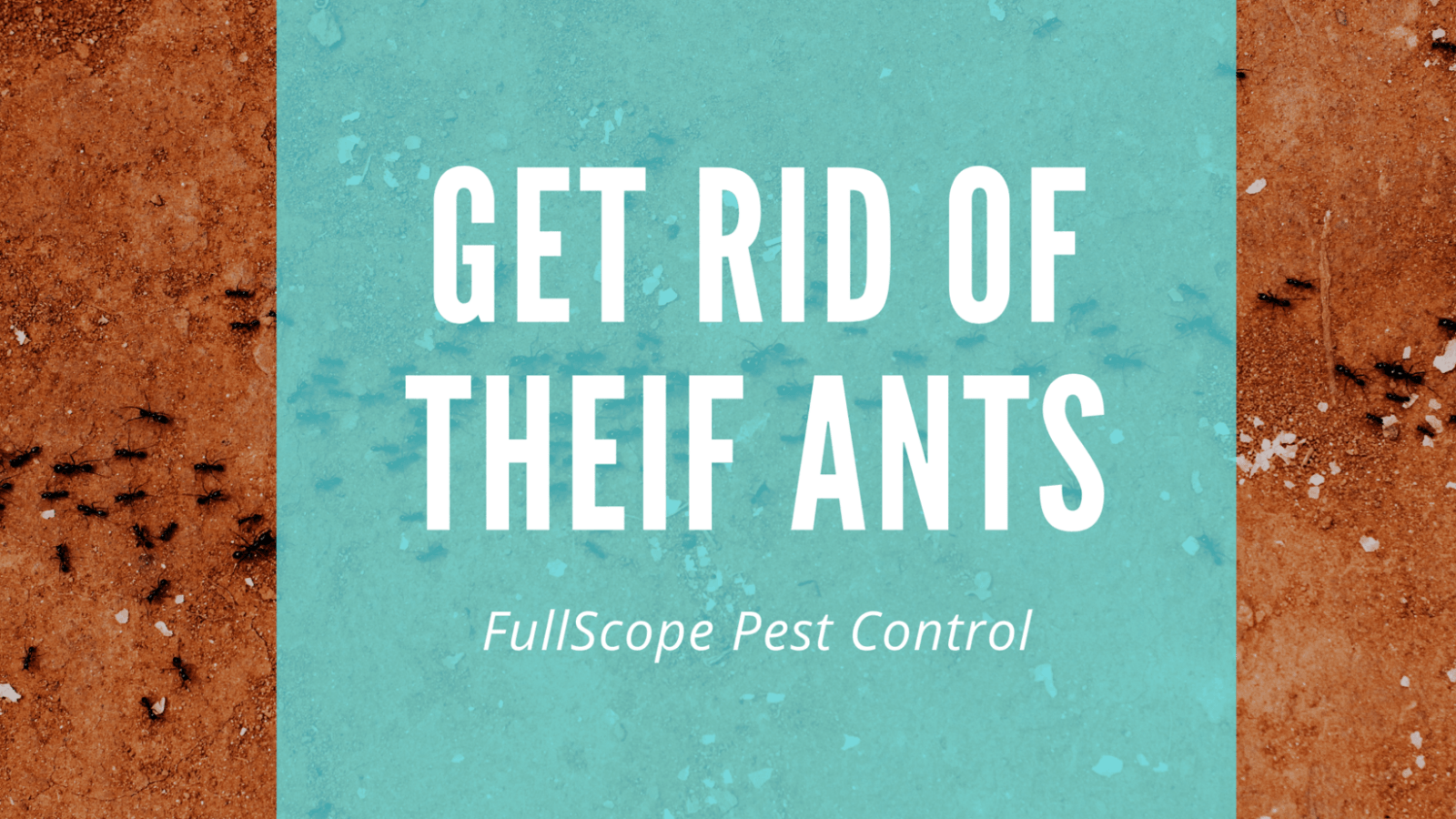 Get Rid of Thief Ants in Your New Caney House and Yard