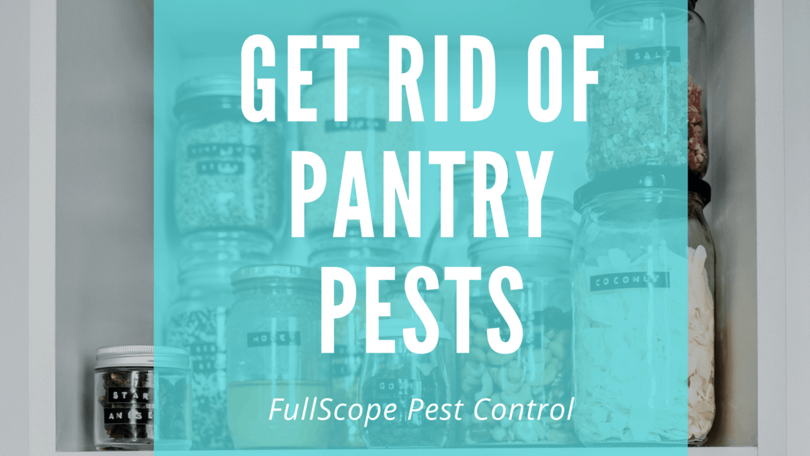 Keeping Pantry Pests Out of Your Kingwood Home
